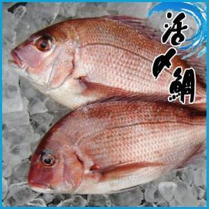鯛めし、塩焼、鯛汁、鯛の煮付け、鯛の昆布じめ、唐揚げなどレシピ多数です!!  鯛の上に白髪ねぎと生姜...