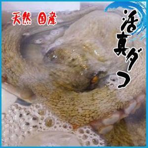 業務用 活真ダコ 天然 国産 1尾1-1.5kg たこ 蛸 タコ 旨い! i-ichiba