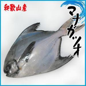 マナガツオ 和歌山産  一尾  約1.8〜2.21kg前後 【市場直送旨い魚】|i-ichiba