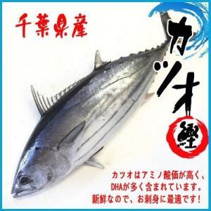 【厳選仕入】カツオ 1尾(約2.6-3.5kg)千葉県産 かつお 鰹|i-ichiba