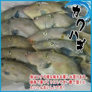 カワハギ 約1kg (3尾前後入り) かわはぎ|i-ichiba