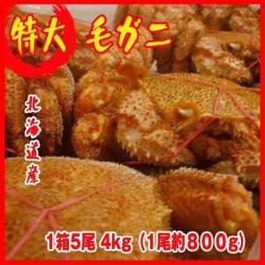 特大 毛ガニ 1箱5尾 4kg(1尾約800g)北海道&オホーッツ産 カニ 蟹 かに  化粧箱入|i-ichiba