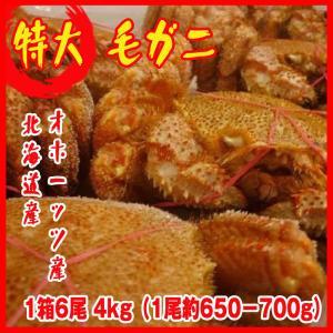 特大 毛ガニ 1箱6尾 4kg(1尾約650−700g)北海道&オホーッツ産 カニ 蟹 かに  化粧箱入|i-ichiba