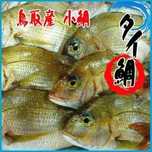 小鯛 2.5kg以上(4-5尾前後入)鯛 タイ たい 鳥取産|i-ichiba