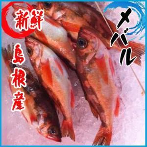 メバル 1kg 4-5尾 北海道・青森・山形産 i-ichiba