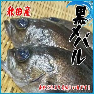 業務用 送料無料 黒メバル 秋田 3kg前後 約10-12尾前後|i-ichiba