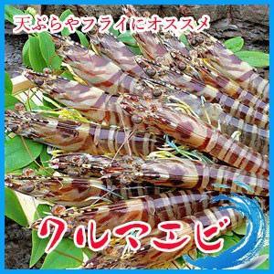 業務用 プレミアム  クルマエビ 大干し1kg(約40-60尾入り) 沖縄県産 海老 えび|i-ichiba