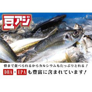 千葉産 豆アジ 1kg(1尾 約10-40g前後) じんた ジンタ 鯵 あじ マメアジ まめあじ i-ichiba