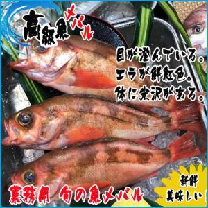 旬の魚 メバル  1kg  築地|i-ichiba