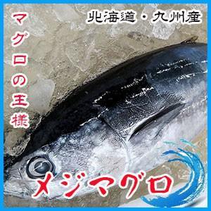 業務用   生メジマグロ  約9.5〜10.5kg前後 3枚卸    北海道・九州産|i-ichiba