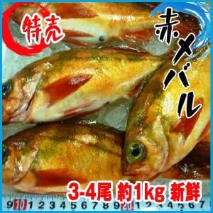 赤メバル 3-4尾 約1kg 新鮮 めばる 目春 i-ichiba