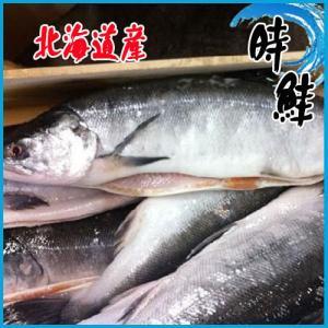 時鮭 冷凍  1尾約2kg前後  サケ  北海道産さけ シャケ しゃけ|i-ichiba