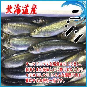 4-5人前 北海道産 ニシン 約1kg以上(3尾前後入り) にしん 1尾300g前後|i-ichiba