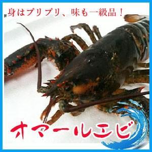 中サイズ 2-3人前 活オマールエビ 1尾400-500g エビ えび 海老 蝦 バーベキュー・フレンチ|i-ichiba
