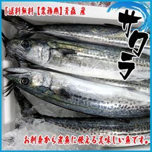 業務用 送料無料 サワラ 青森 1尾3-4kg前後|i-ichiba