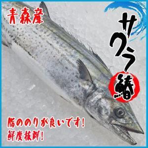 【業務用】青森産 サワラ 2尾 約5kg前後  鰆 さわら|i-ichiba