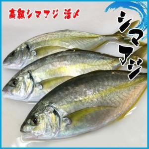 4-5人前 高級シマアジ 活〆 1-1.5kg 鯵 あじ|i-ichiba