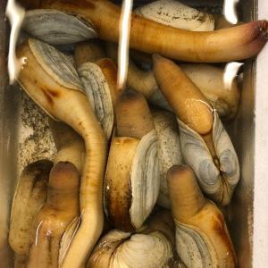 産地:北海道  貝臭さが薄くあっさり食べやすく、どなたでも美味しくお召し上がり頂けます。 白ミル貝は...