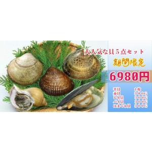 大人気な貝 5点セット おすすめ商品|i-ichiba