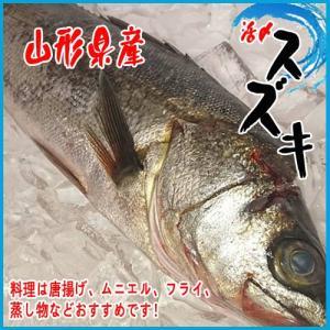 山形県産 活〆スズキ 1尾 約2kg以上 すずき|i-ichiba