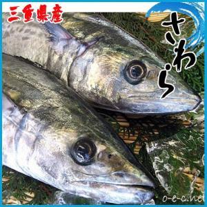 刺身用 三重県産、徳島産、大分産 釣り鰆(さわら)1尾2.0kg前後[国産]★築地|i-ichiba
