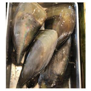 【ビックリ仰天特大サイズ】活 平貝 3枚 (1枚約20cm) バーベキューにオススメ!! タイラガイ タイラギ|i-ichiba