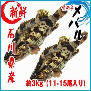 【業務用】石川県産 竹の子メバル 約3kg(11-15尾入り) タケノコメバル|i-ichiba