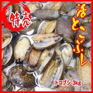 業務用 送料無料 活とこぶし 3kg 1個18-35g トコブシ|i-ichiba
