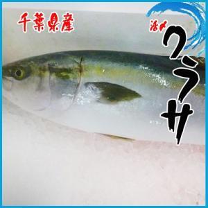 【業務用】千葉県産 活〆ワラサ 1尾入(約4-5kg)稚鰤 わらさ|i-ichiba