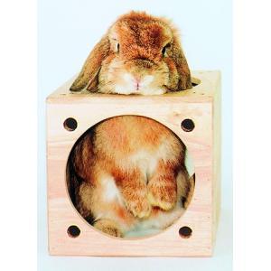 川井 KAWAI キューブハウス 送料無料 うさぎ チンチラ ハウス|i-rabbit