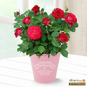 母の日産直ギフト 花キューピットの母の日バラ スカーレットオ...