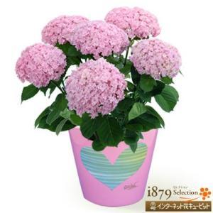 母の日産直ギフト 花キューピットのあじさい てまりてまり(ピンク)【オリジナルハートポット】