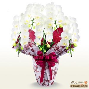 モテギ洋蘭園胡蝶蘭・お祝い 花キューピットのミディ胡蝶蘭 スーパーアマビリス5本立(46輪前後)|i879
