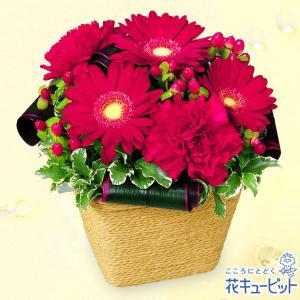 11月の誕生花(ガーベラ等) 花キューピットの赤ガーベラのアレンジメント 誕生日 お祝い 記念日 プレゼント|i879