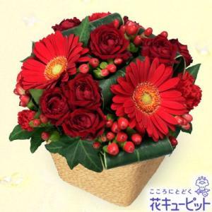 12月の誕生花(赤バラ等) 花キューピットの赤ガーベラと赤バラのアレンジメント 誕生日 お祝い 記念日 プレゼント|i879