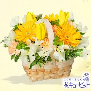 お祝い 花キューピットのチューリップとガーベラのバスケットアレンジメント 花 プレゼント 誕生日 記念日 歓送迎