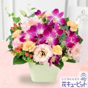 お祝い 花キューピットのデンファレとトルコキキョウのアレンジメント 花 プレゼント ギフト|i879