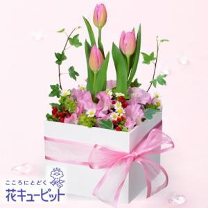お祝い 花キューピットのチューリップのスクエアアレンジメント 花 プレゼント ギフト i879