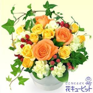 お祝い 花キューピットのオレンジバラのアレンジメント 花 プレゼント ギフト|i879