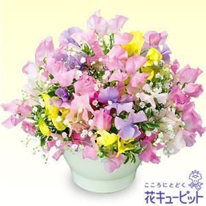 結婚祝 花キューピットのスイートピーのアレンジメント 花 ギフト お祝い プレゼント|i879