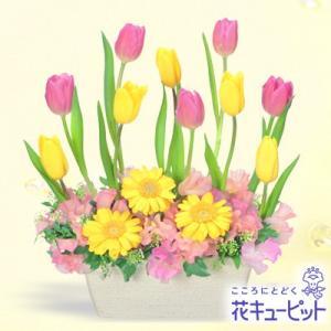 出産祝い 花キューピットのチューリップのガーデンアレンジメント 花 ギフト お祝い プレゼント i879
