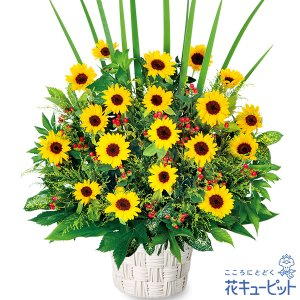 開店祝い・開業祝い 花キューピットのひまわりの華やかアレンジ...