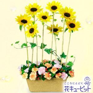 開店祝い・開業祝い 花キューピットのひまわりのモダンアレンジメント|i879