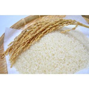 特別栽培米ミルキークイーン|ibaraki-shop