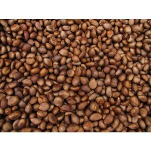 枇杷種 ビワ生種 国産びわ 鹿児島びわの種通販 1Kg 無農薬ビワ