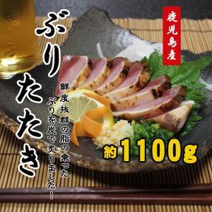 ぶりのたたき ブリ 鰤 タタキ 1100g 鹿児島産 送料無料|ibusukiya