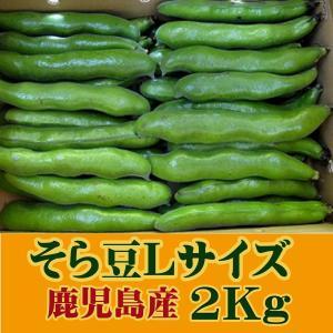 そら豆 鹿児島 Lサイズ 3〜4粒 2kg 国産 そらまめ 空豆 蚕豆 サヤ付き