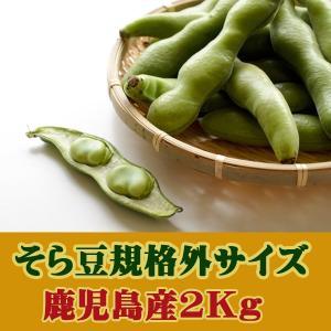 そら豆 空豆 ソラマメ 鹿児島 指宿産 Mサイズ(2〜3粒)2kg サヤ付き 蚕豆