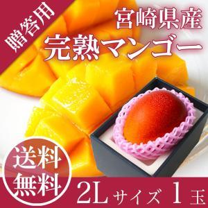 完熟 マンゴー 2L1玉入り 送料無料 宮崎県産 父の日 ギ...