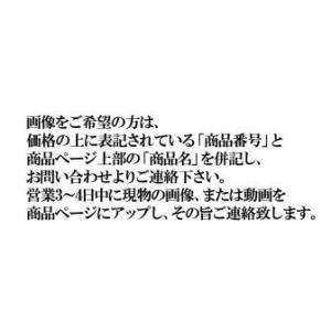 M.マックローチ(メラノタエニア)(ドワーフオーストラ|ichigaya-fc-e-shop
